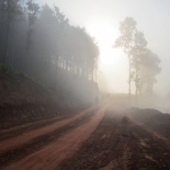 Rider's kicking up a dust cloud in the morning mist